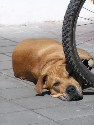 Hund liegt neben dem Fahrrad