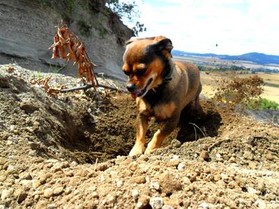 Hund sucht Etwas