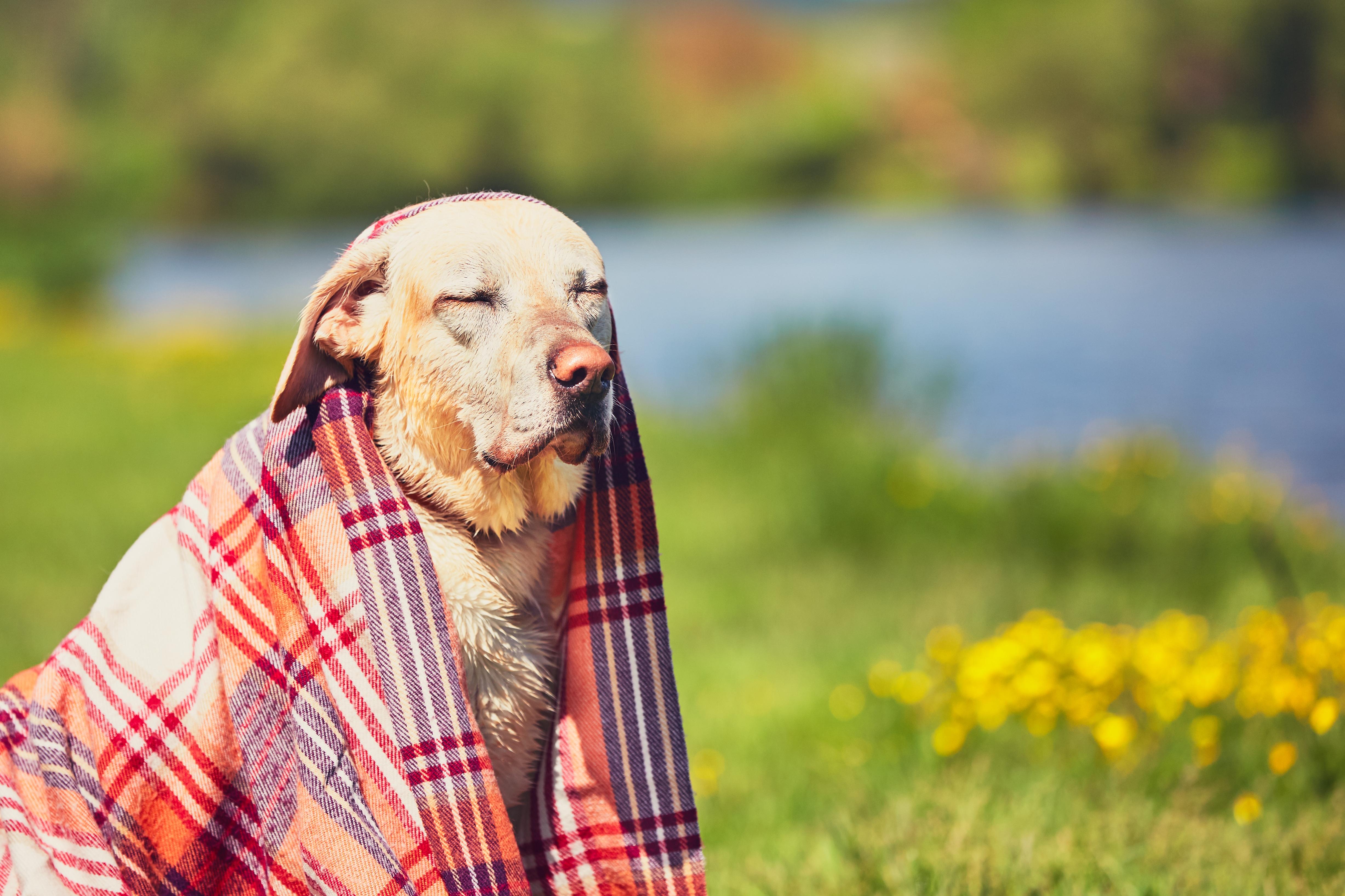 Ein Hund nach dem Schwimmen